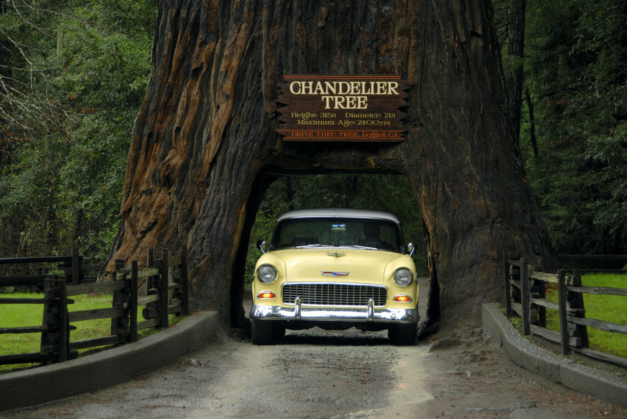 California redwoods northern californias chandelier drive thru tree chandelier drive thru tree with 1951 chevy aloadofball Choice Image